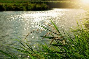 analyse_environnementale_fonctionnalite_environnement_winlassie